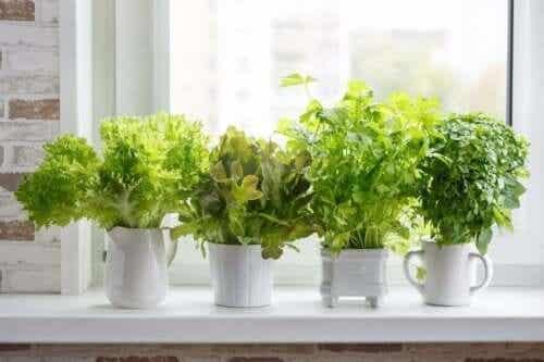 Hoe verschillende culinaire planten te kweken
