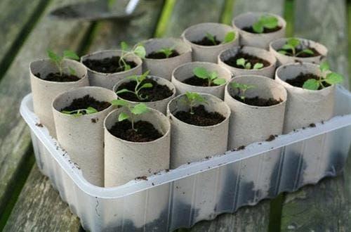 Culinaire planten kweken