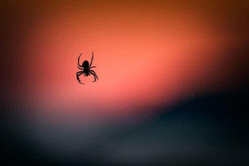 Het effect van het gif van een spin op hersenschade