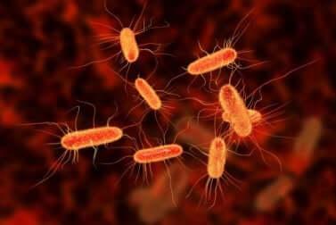 Een close-up van bacteriën