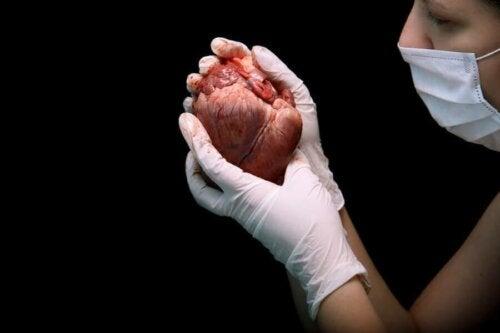 Informatie over een harttransplantatie