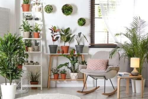 Robuuste planten die niet veel zorg nodig hebben