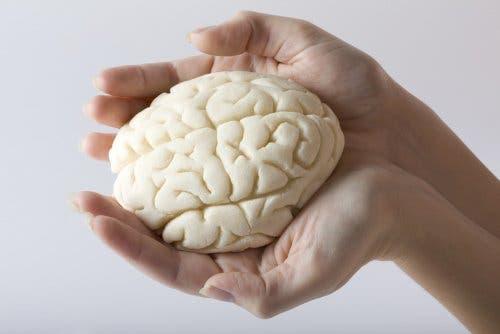 Vetten zijn noodzakelijk voor gezonde hersenen