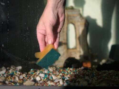 Een schoon aquarium