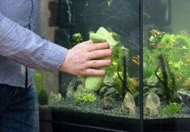 Hoe je eenvoudig een aquarium schoonmaakt