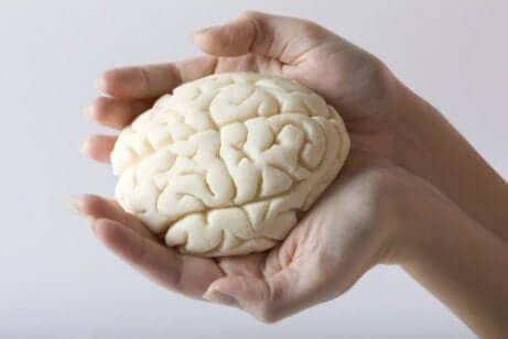 Een klein model van het menselijk brein in iemands handen