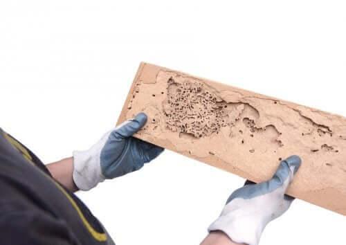 Hoe de tekenen van houtworm te identificeren
