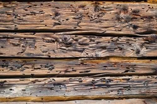 Hoe kun je zien of je hout is aangetast?