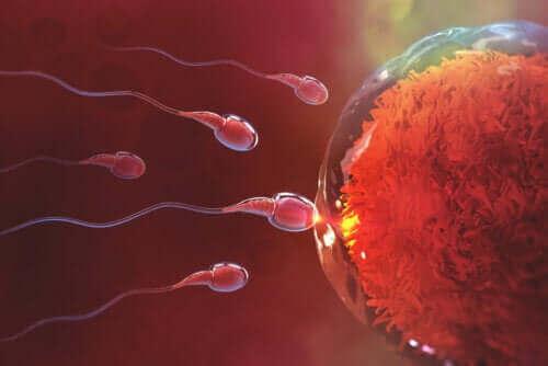 Hoe lang duurt het om na seks zwanger te raken?