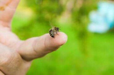 4 etherische oliën om bijensteken te verlichten