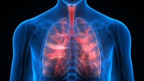 Werking van de longen in het lichaam