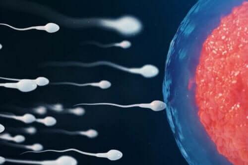 Sperma gaat eicel bevruchten