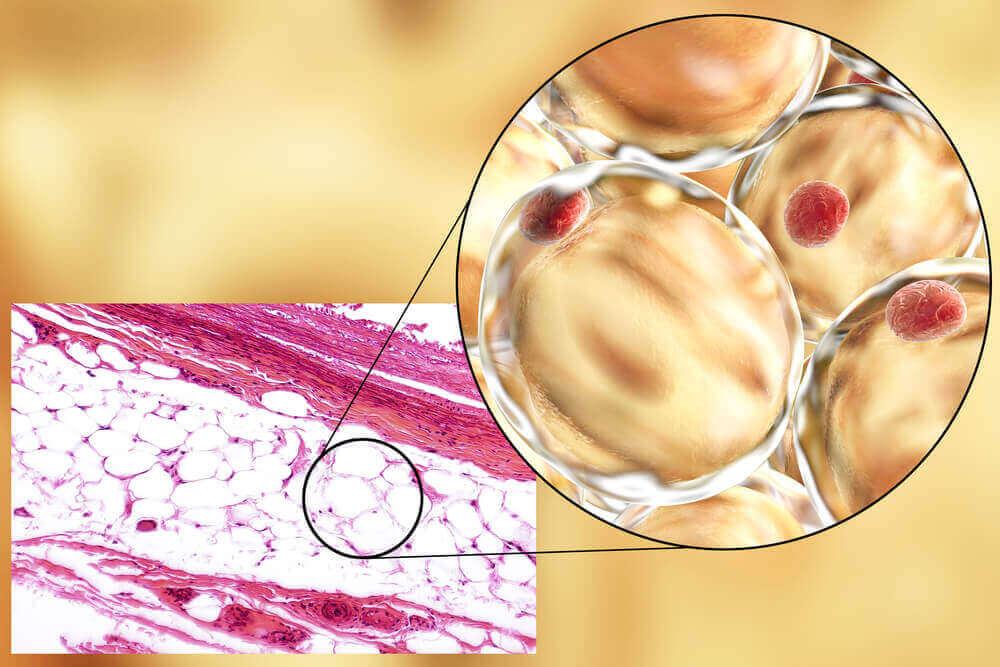 Adiponectine is een eiwit