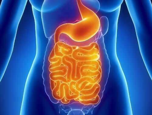 Oorzaken en kenmerken van een cold shock en het verband met het spijsverteringskanaal
