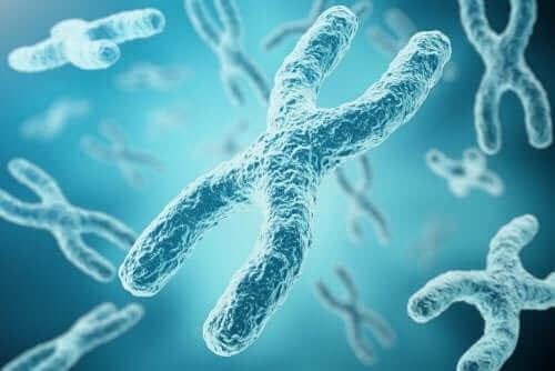 Een digitaal beeld van chromosomen