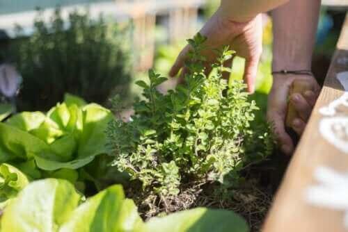 Een tuin op je terras: de beste tips