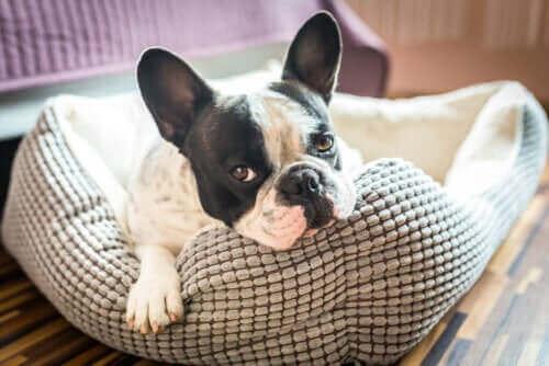 Ontdek 5 ideeën voor huisjes voor huisdieren