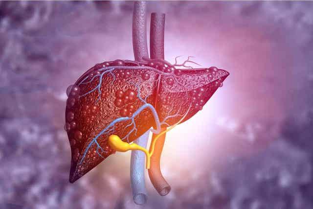 Effect op de lever van braaknoot
