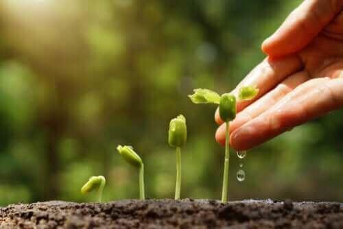 Ontdek 6 tips voor een duurzame tuin