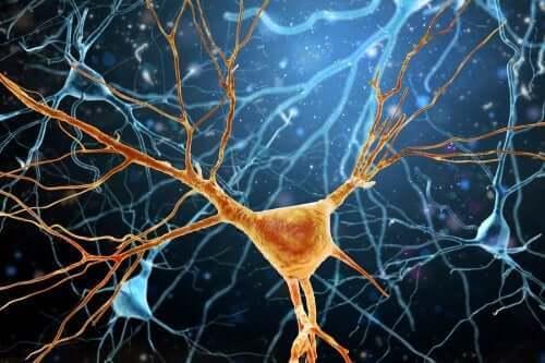 Von Economo-neuronen: cellen voor socialisatie