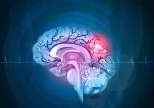 De verschillende delen van de hersenen
