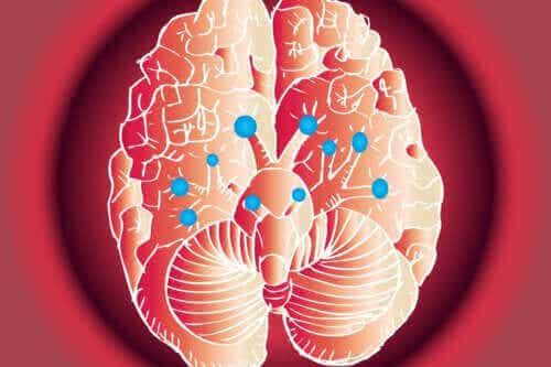 De functies van de twaalf hersenzenuwen
