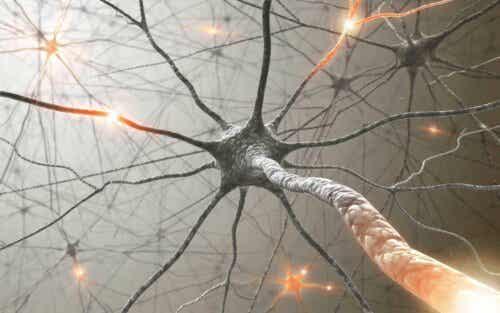 Een netwerk van neuronen