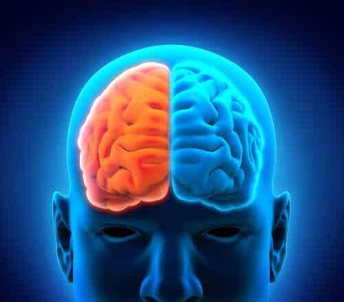 Hersenen in oranje en blauw verdeeld