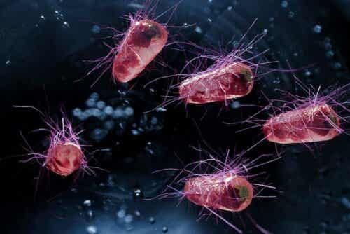 Bacteriën die diarree veroorzaken