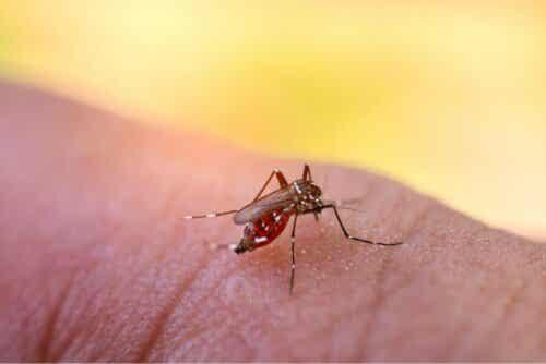 Een mug op een lichaamsdeel