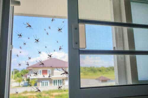 Basilicum als natuurlijk afweermiddel tegen muggen