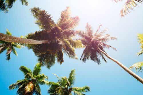 Palmbomen vanaf de onderkant gefotografeerd