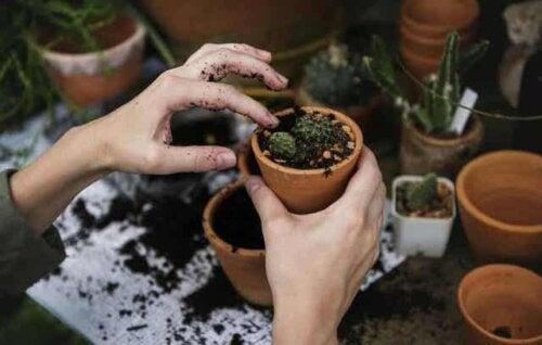 Een vrouw plant vetplanten
