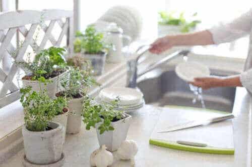 5 voordelen van planten in de keuken