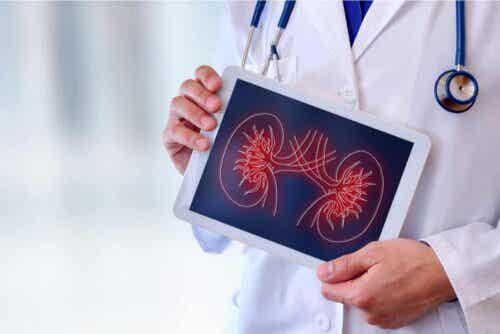Een afbeelding op een ipad van de nieren