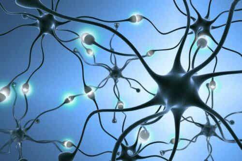 Een afbeelding van een neuronennetwerk in het lichaam