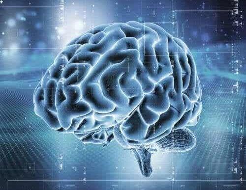 Een digitaal beeld van de hersenen