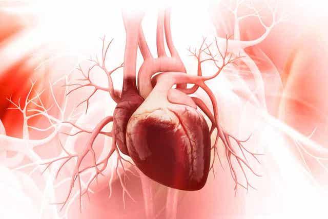 Een digitaal beeld van het hart