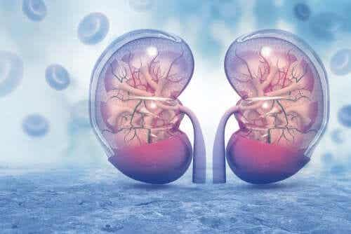 Een digitaal beeld van de nieren