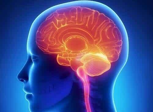 Plaatje van hersenen