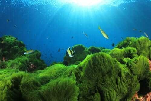 Leuke weetjes over eetbare plankton