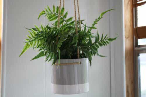 Varen in een hangende plantenbak